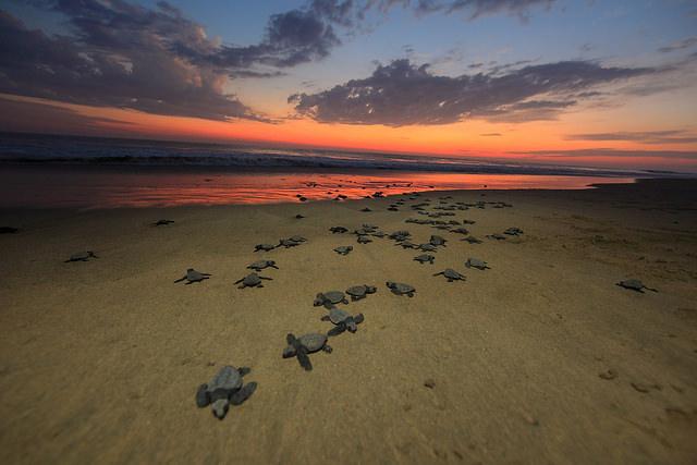 Playa Viva Turtles