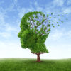 Memory loss due to  Dementia and Alzheimer's disease with  the medical icon of a tree in the shape of a human head and brain losing leaves.